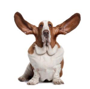 listeningdog-450x447