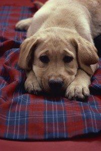 sad_dog-201x300